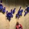 Lavender Dragon01